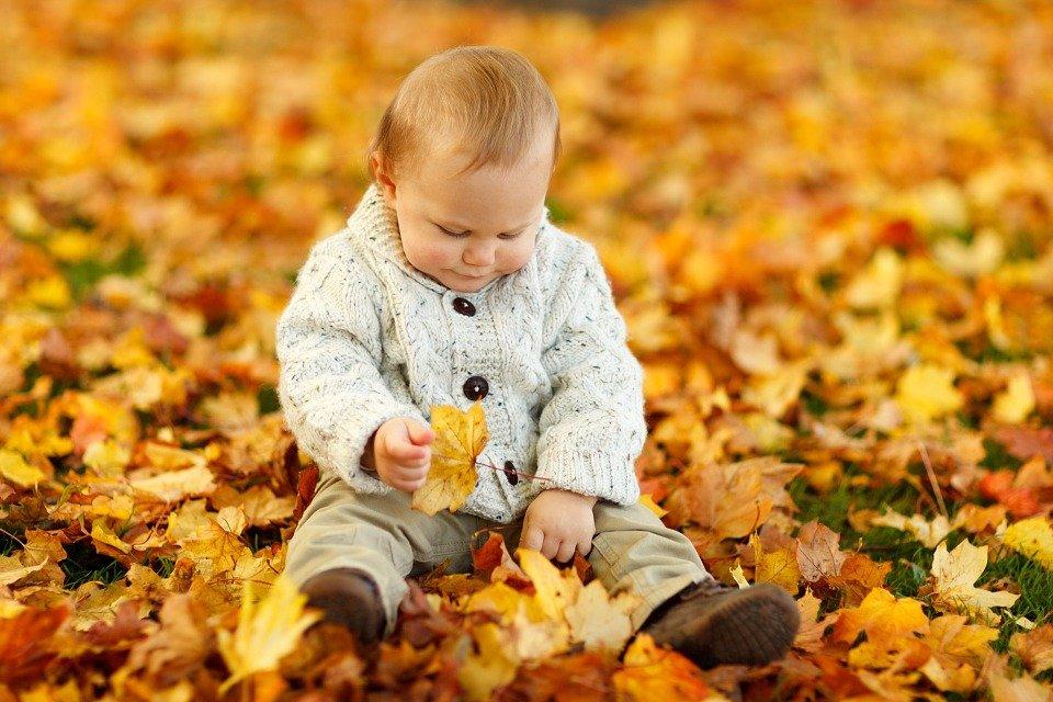 autumn-165184_960_720.jpg