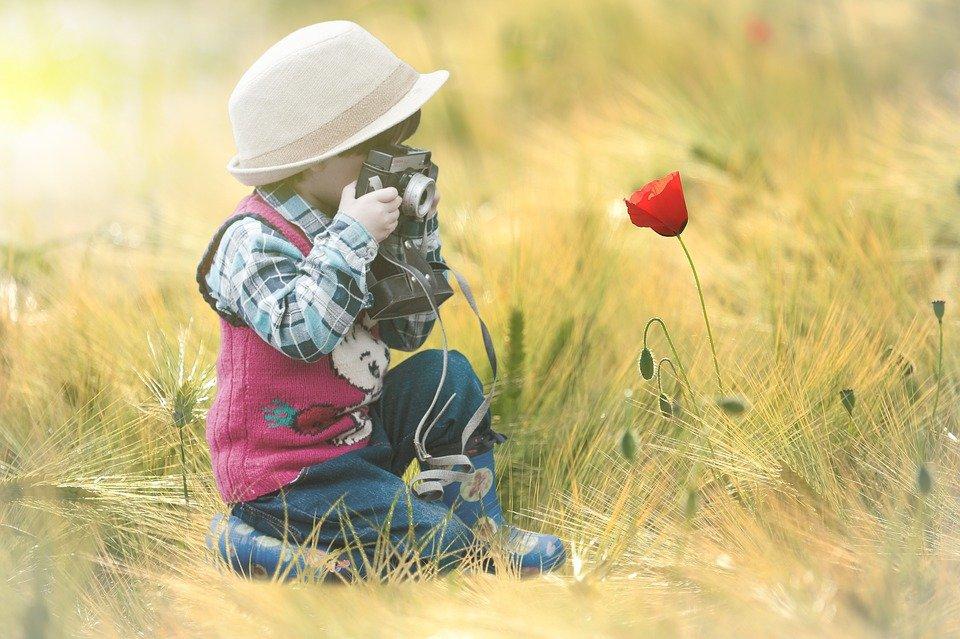 flower-4339932_960_720.jpg